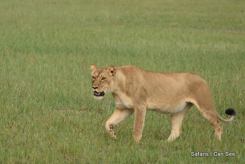 Predator Excitement in Hwange National Park