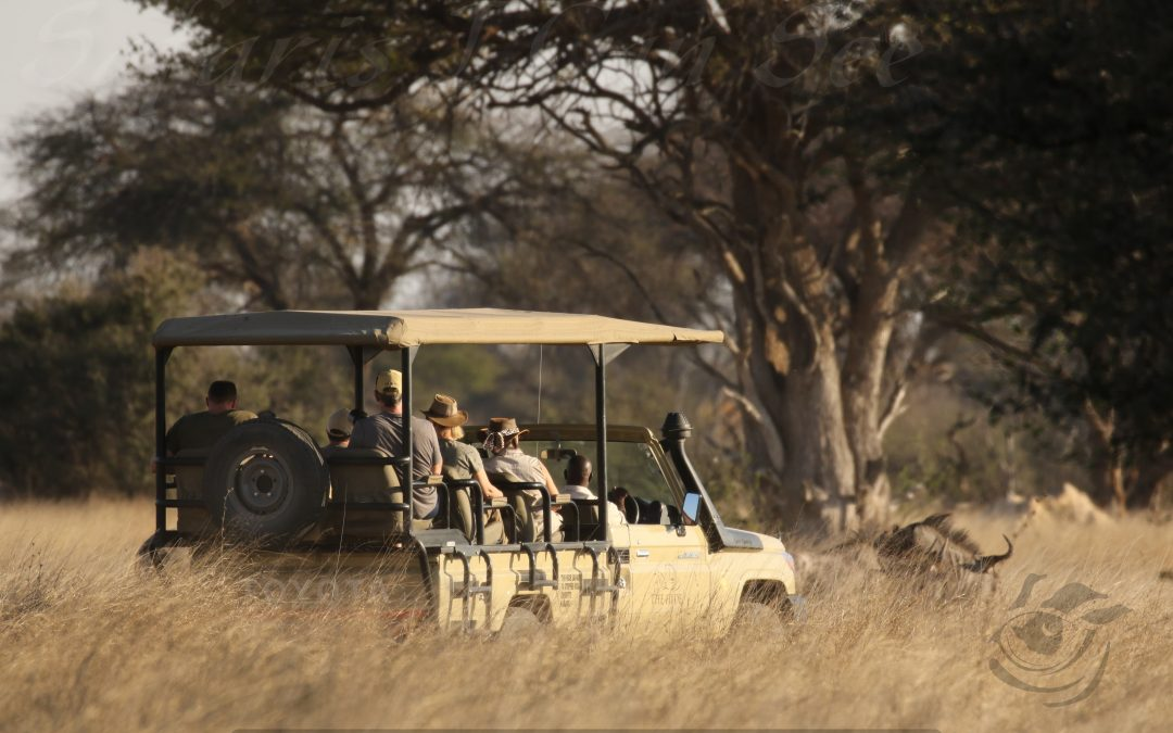 Our Top 5 Tips For A Safari in Zimbabwe